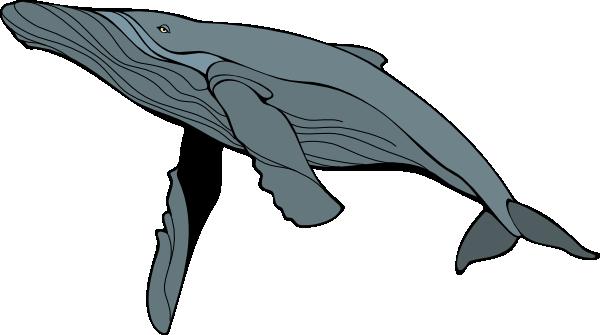 humpback whale clipart
