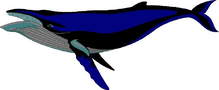 Humpback Whale Clip Art Clipart Panda Free Clipart Images