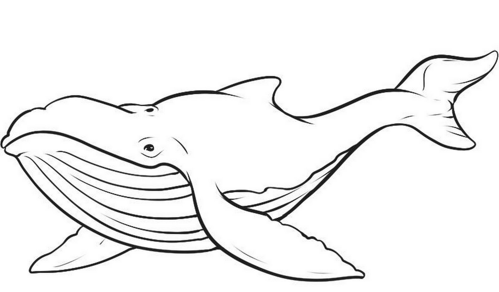 Humpback Whale Vector Clipart Panda Free Clipart Images