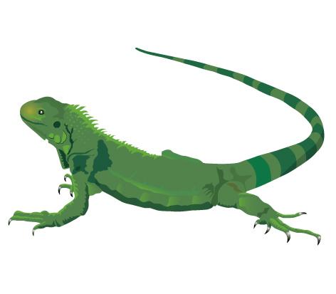 Iguana Clip Art-Iguana Clip Art-1