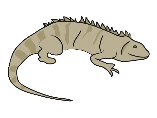 Best Iguana Clipart-Best Iguana Clipart-3