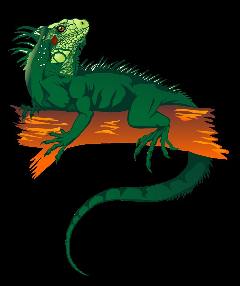 Iguana Clip Art-Iguana Clip Art-14