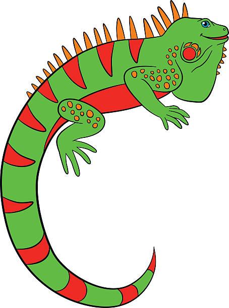Iguana Clipart Clip Art, Vector Images U-Iguana Clipart Clip Art, Vector Images u0026 Illustrations-17