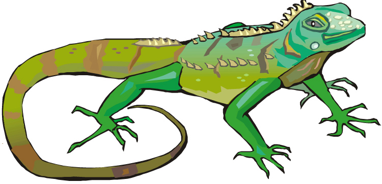Iguana Clipart Iguana11 Jpg-Iguana Clipart Iguana11 Jpg-12