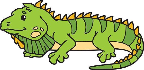 Şirin Iguana.-Şirin iguana.-20