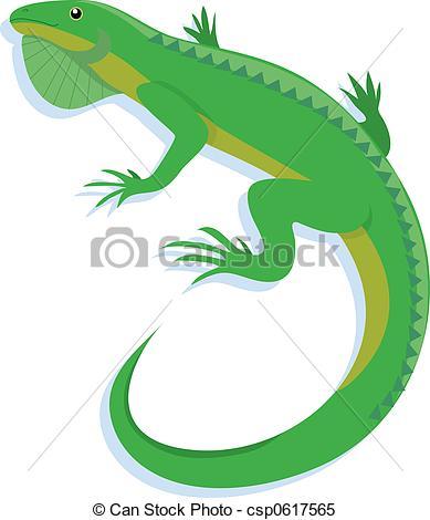 ... Iguana on a white background