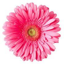 Image result for gerbera daisy clip art