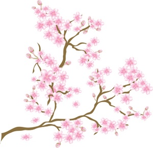 Images Cherry Blossoms Stock Photos Clip-Images Cherry Blossoms Stock Photos Clipart Cherry Blossoms Pictures-0