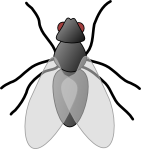 insect clipart black and whit - Insects Clipart