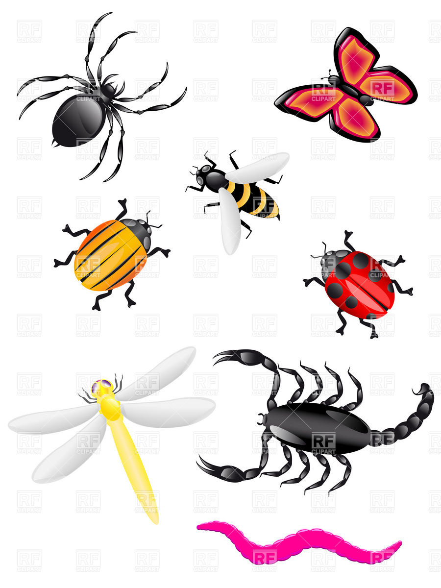 Insects 19138 Plants And Animals Downloa-Insects 19138 Plants And Animals Download Royalty Free Vector Clip-14