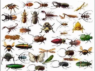 Insects Clip Art - Getbellhop - Insects Clipart