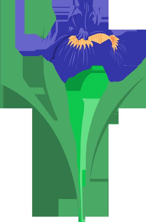Iris cliparts-Iris cliparts-0