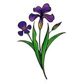 Iris Flower Clipart-Iris Flower Clipart-1