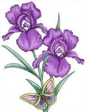 Iris-Iris-18
