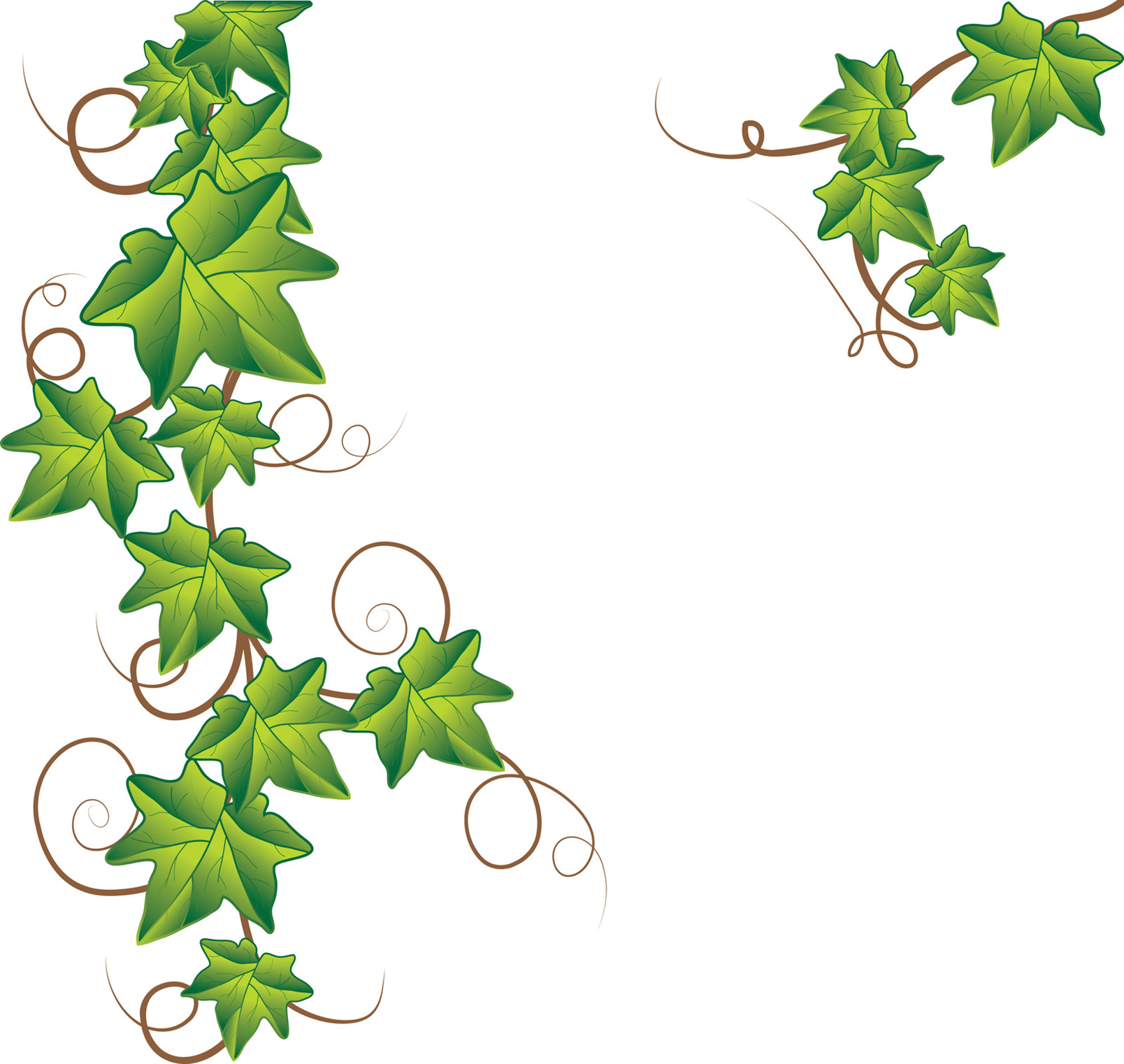 Ivy Free Images At Clker Com Vector Clip-Ivy Free Images At Clker Com Vector Clip Art Online Royalty Free-15