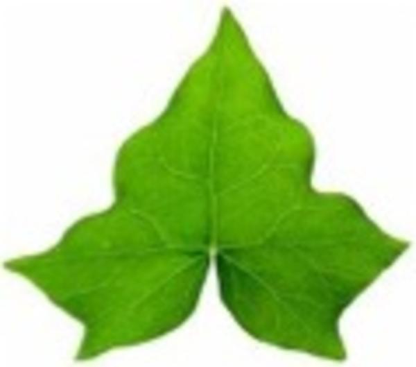 Ivy Leaf Free Images At Clker Com Vector Clip Art Online Royalty