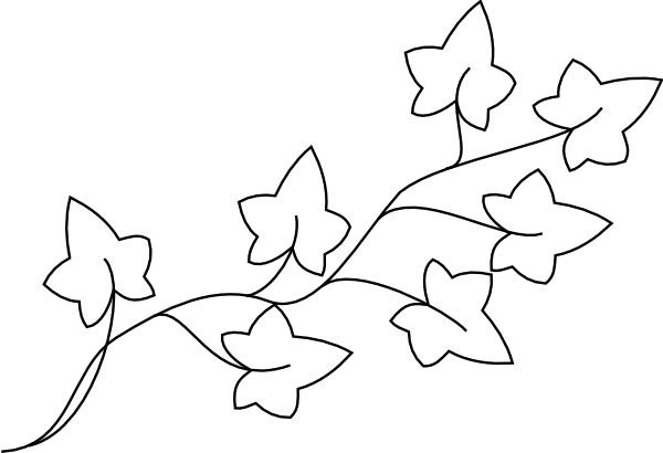 Ivy leaf, Ivy and Leaf .-Ivy leaf, Ivy and Leaf .-10