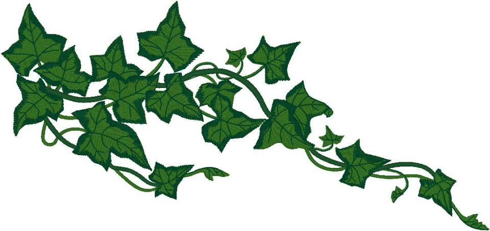 Ivy vines clipart