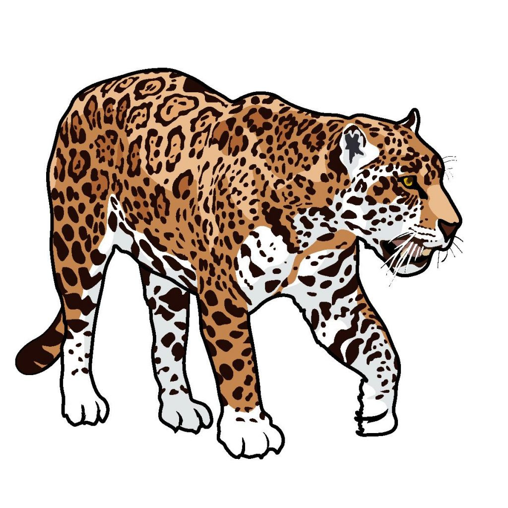 . ClipartLook.com Precious Jaguar Clipart HD Animal Cartoon Free Clip Art Images File ClipartLook.com