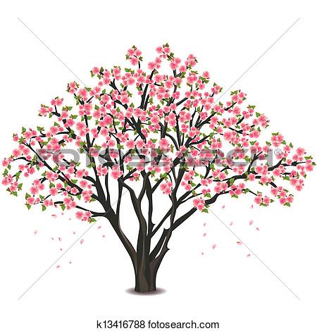 japanese cherry tree blossom .