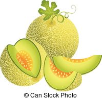 ... Juicy Cantaloupe Melon - Scalable ve-... Juicy Cantaloupe Melon - Scalable vectorial image.-14