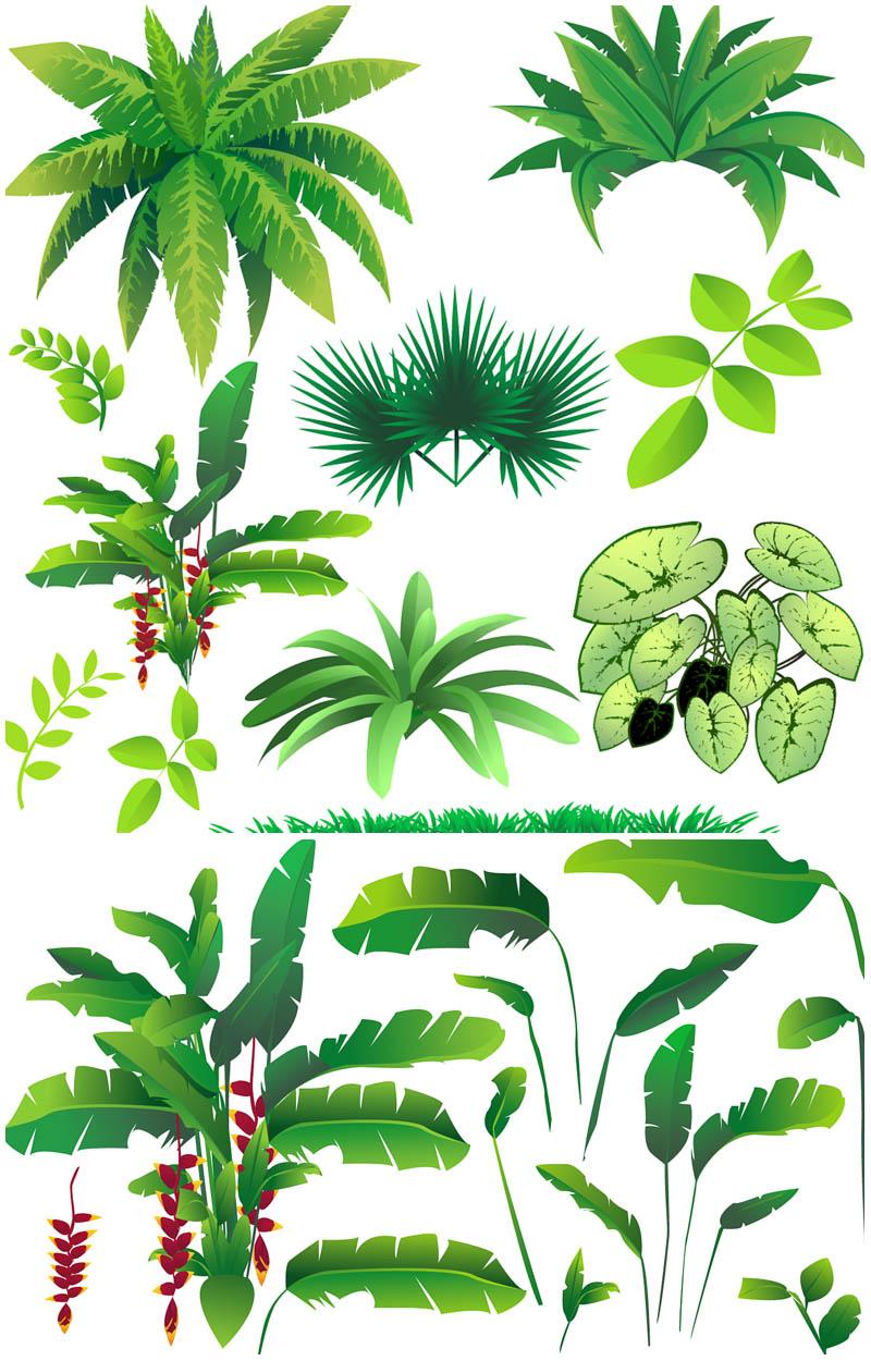 Jungle plants clipart