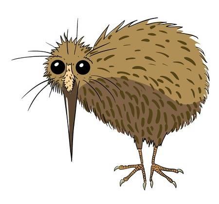 Cartoon Image Of Kiwi Bird Illustration-Cartoon image of kiwi bird Illustration-2