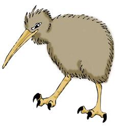 Kiwi Bird-Kiwi Bird-8