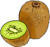 kiwi fruit cartoon .