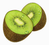 Kiwi Fruit Illustrations And Clipart