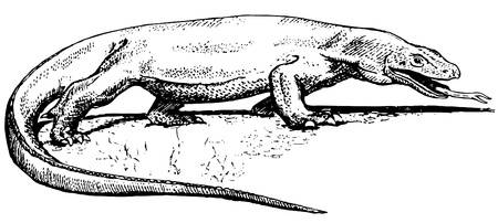 Komodo Dragon Royalty Free Cliparts, Vec-Komodo Dragon Royalty Free Cliparts, Vectors, And Stock Illustration. Image  10402838.-17