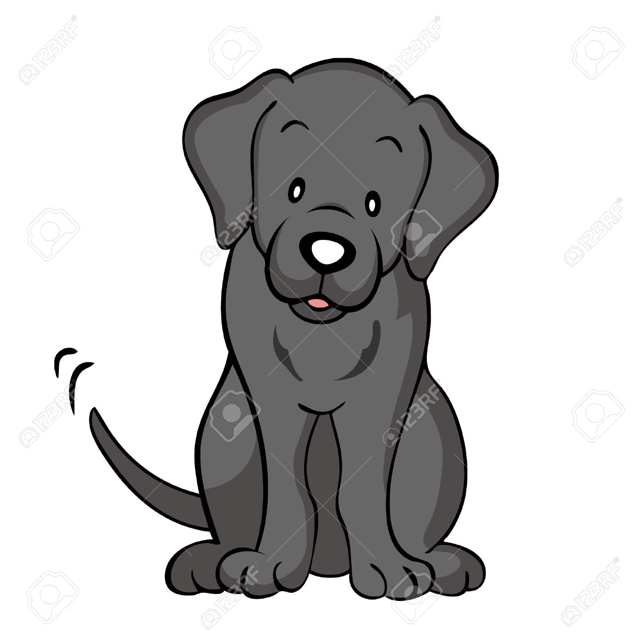 labrador retriever: Black labrador dog isolated