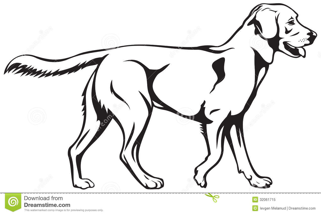 Labrador retriever dog breed Royalty Free Stock Photo