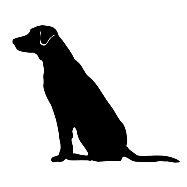 Labrador retriever, Labradors .
