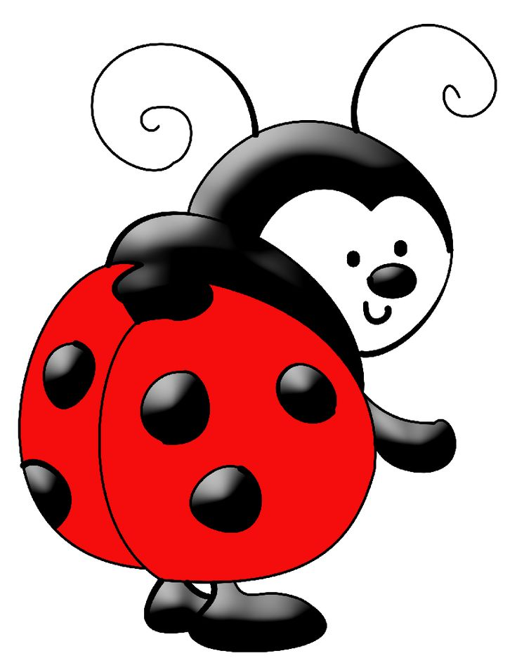 Lady bug on ladybugs san .