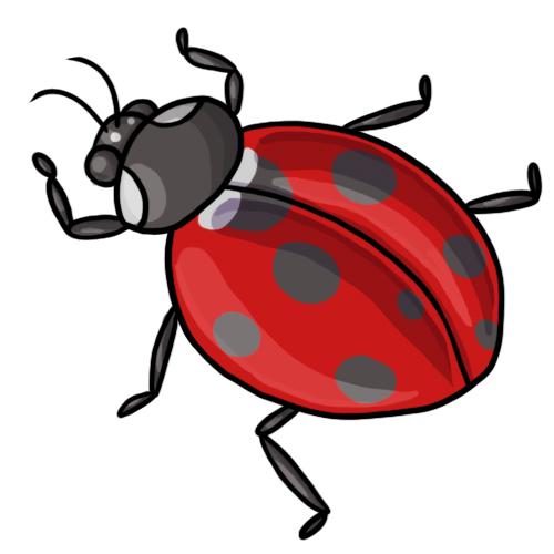 Ladybug Clipart-Clipartlook.com-500