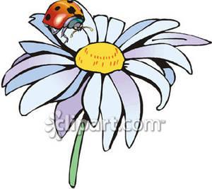 Ladybug On a Daisy Clip Art