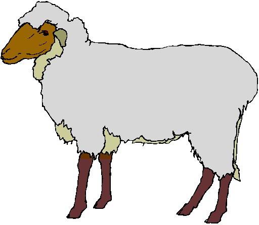 lamb clipart-lamb clipart-13