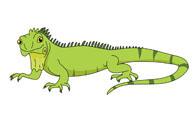 large green iguana lizard clipart. Size:-large green iguana lizard clipart. Size: 32 Kb-13