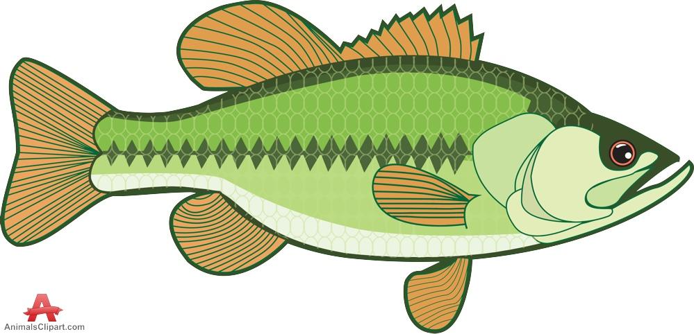 Largemouth Bass Fish Clipart