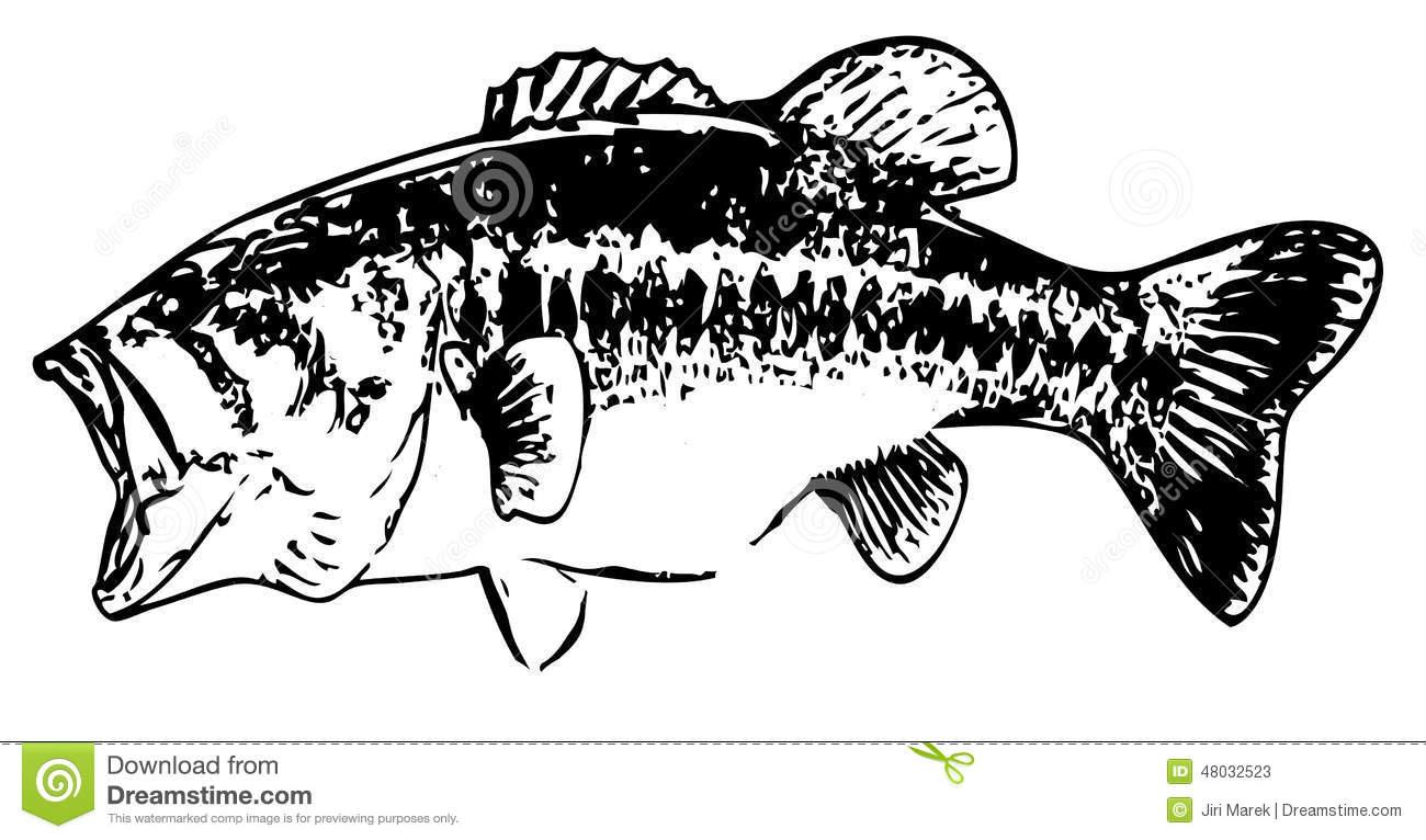 76 Bass Fish Outline Largemouth Bass Clip Art Clipartlook