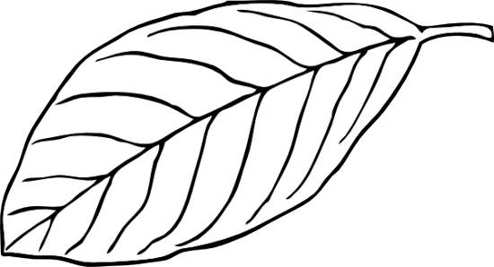 September leaves clipart blac