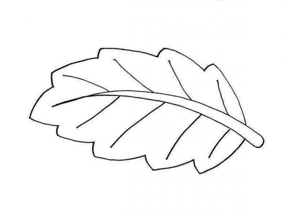 Leaf outline leaf clipart black and white