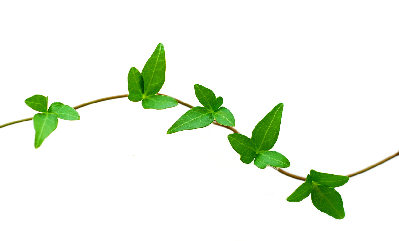 Leaf Vine Clipart Kid-Leaf vine clipart kid-6