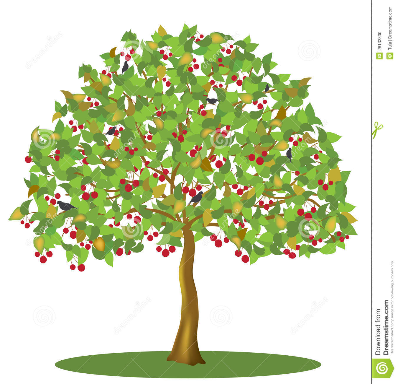 Learn More At ... Cherry Tree .-Learn more at ... cherry tree .-17