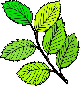 . ClipartLook.com free vector Summer Leaves clip art ClipartLook.com
