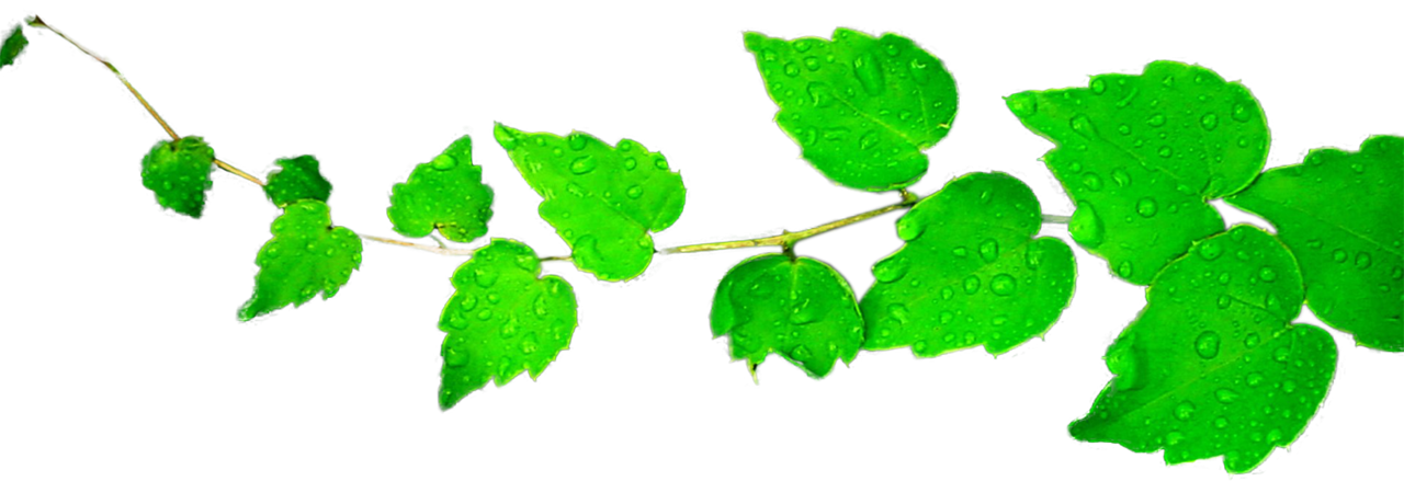 Leaves Clipart PNG by BrielleFantasy ClipartLook.com