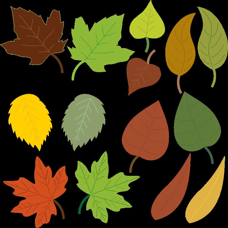 Leaves-leaves-15