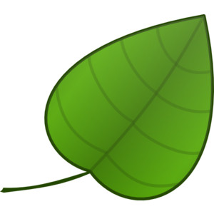 Leaves green leaf clipart .