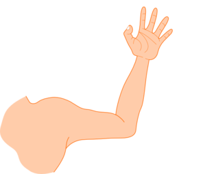 Left Arm Clip Art At Clker Com Vector Clip Art Online Royalty Free